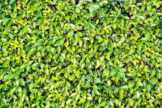 自然の背景に小さな緑の葉の木