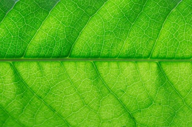 緑色の葉が閉じる。緑の葉マクロ。