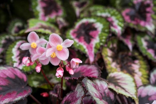 シンガポール植物園のピンクの小さな花。