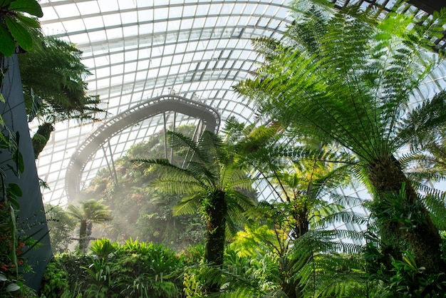 Облачный лесной купол в садах у залива, сингапур.
