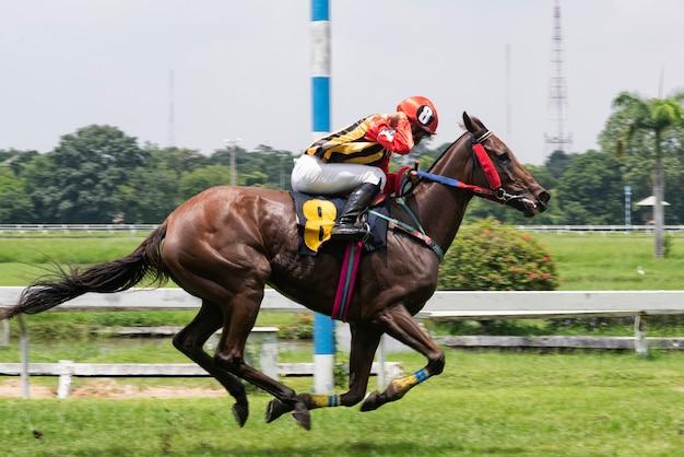 Скаковая лошадь и жокей прыгают через препятствие