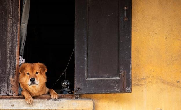 Коричневая собака, заглядывая вперед с настороженным взглядом на окне с системой видеонаблюдения