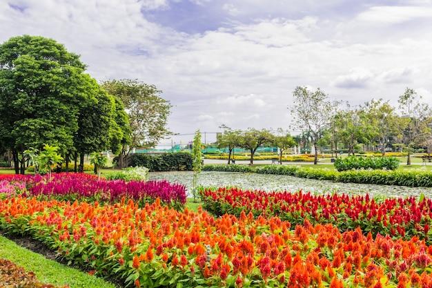 木と芝生の公園