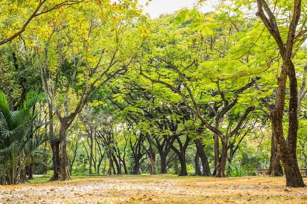 木々に囲まれた公園