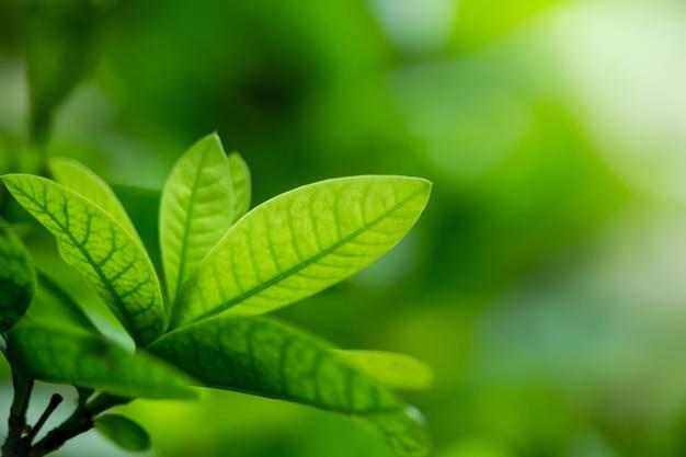 庭の緑の葉の抽象的な背景の自然観