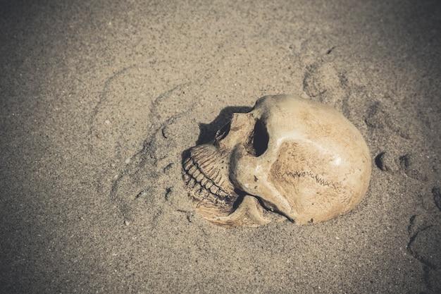 頭蓋骨のある静物
