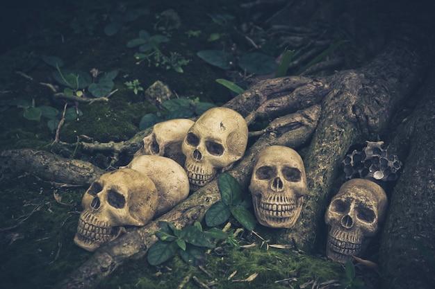 根の上の人間の頭蓋骨のある静物