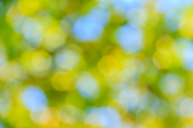晴れた日の自然林緑のボケ味