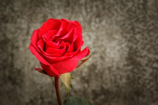 美しいバラの静物。
