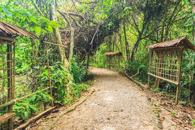 木製の橋とマングローブの森