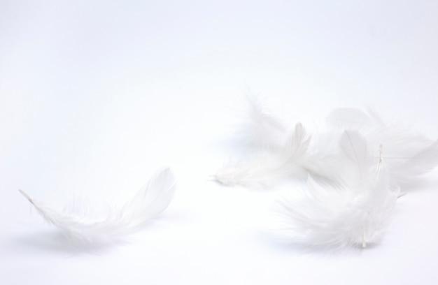 Белые перья на белом фоне.