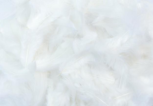 白い羽の背景。
