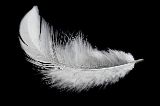 白い羽が黒の背景に分離されました。