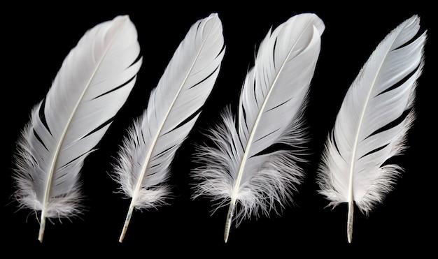 黒の背景に分離された白い羽のセット。
