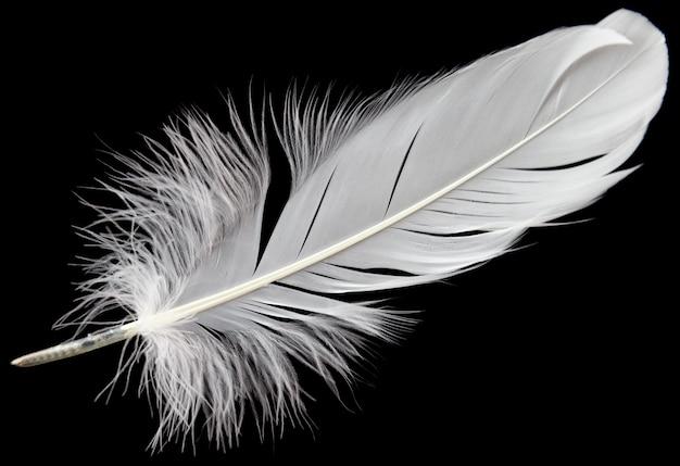 黒の背景に分離された単一の白い羽。