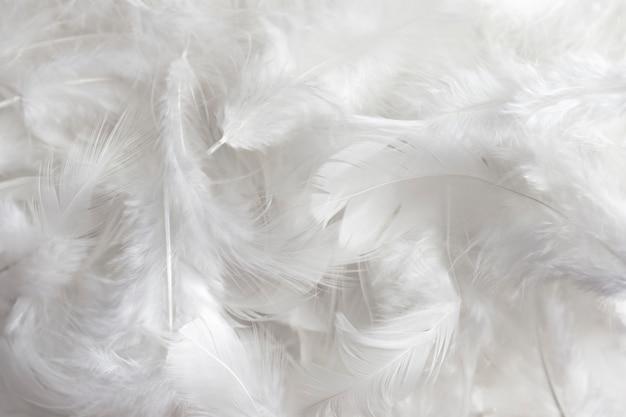 白い羽のテクスチャ背景。