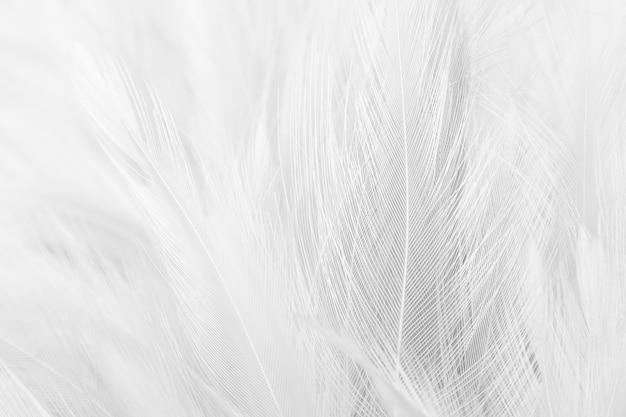 背景として白い羽のテクスチャ。
