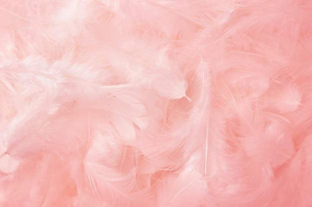 背景としてピンクの羽のテクスチャ。