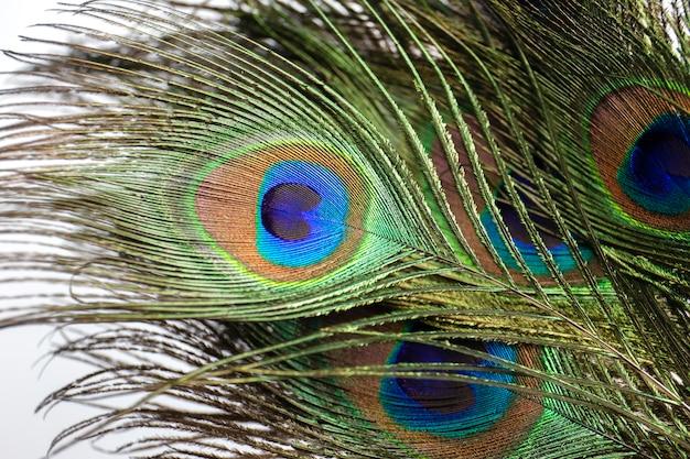 孔雀の目。孔雀の羽の背景。