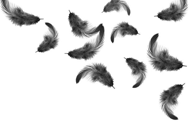 羽の抽象的な背景。黒い羽が空中に落ちます。白い背景に分離されました。