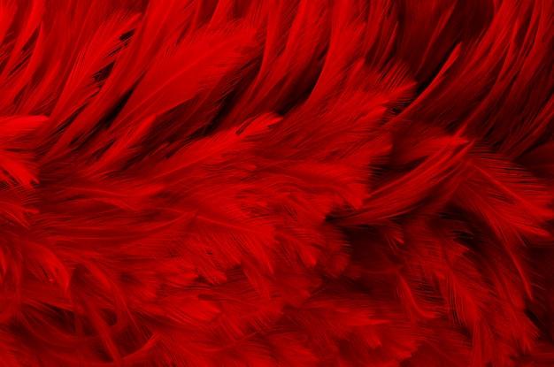 Темно-красные перья