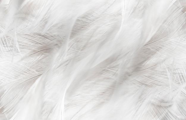 Белые перья