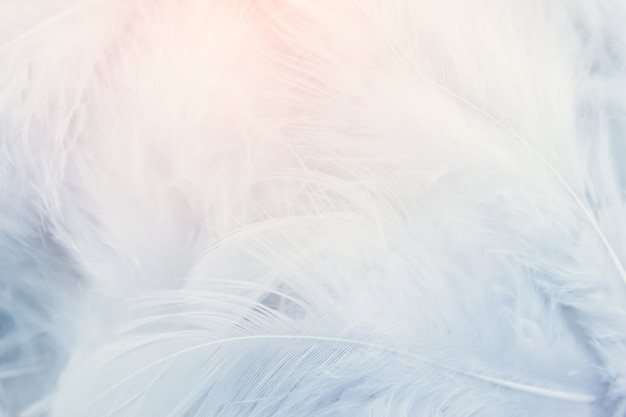 Белый фон текстуры пера