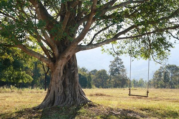 緑の野原、チェンマイ、タイのブランコに乗って大きな木