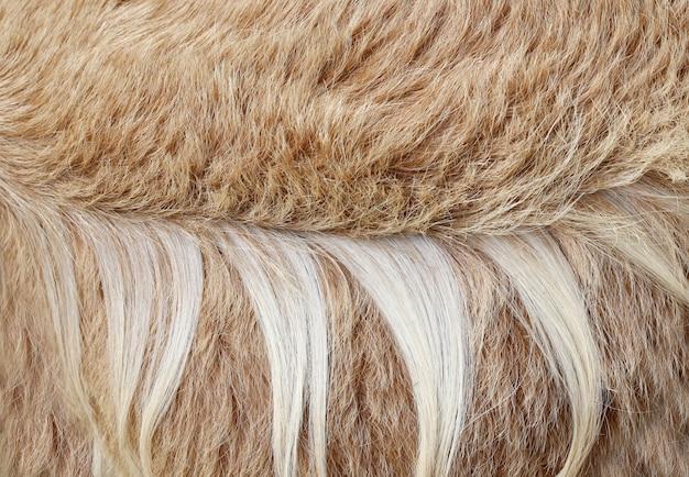 茶色の山羊の髪の質感