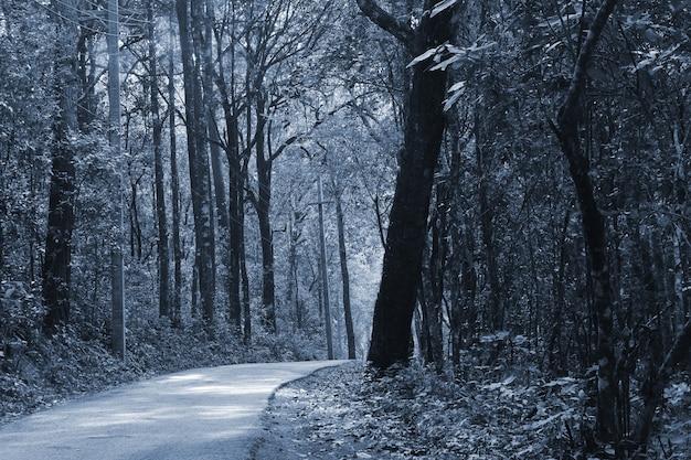 夜、タイの暗い森