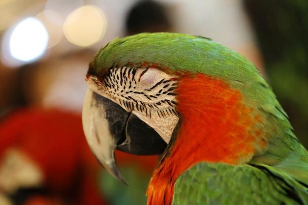 Красивая ара попугай птица