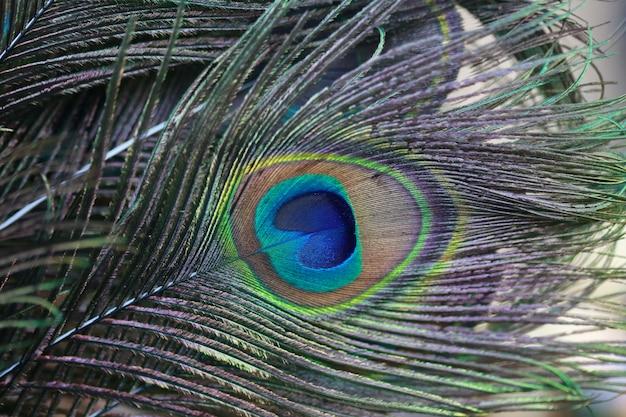 マクロ孔雀の羽
