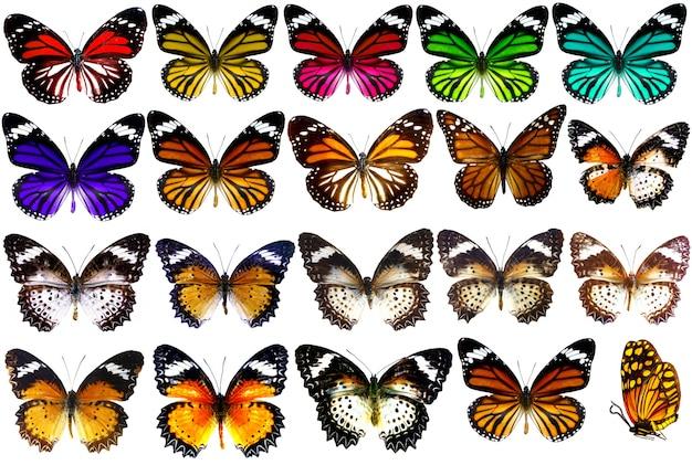 白で隔離される美しい熱帯蝶のコレクション