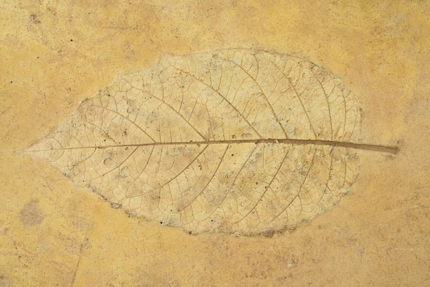 砂岩の床に漆喰を残す