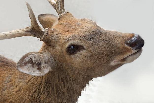 鹿の頭を閉じる