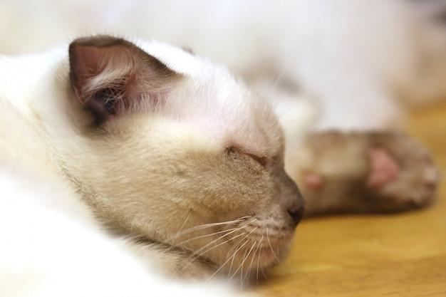 かわいい眠っている子猫猫のクローズアップ、頭
