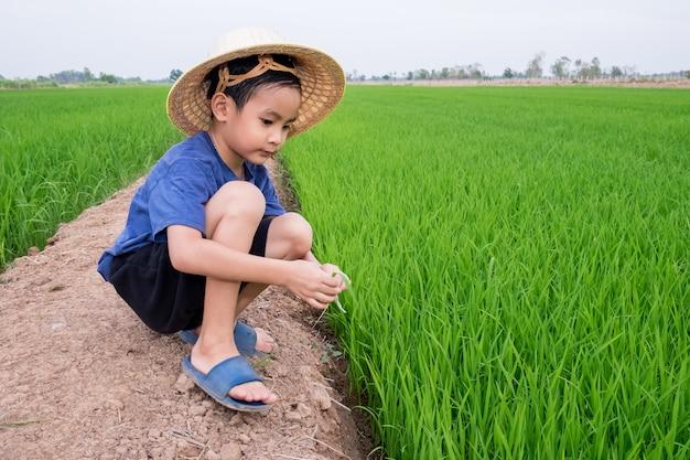 アジアの子供男の子が農場で植物米を座っている竹帽子を着用します。