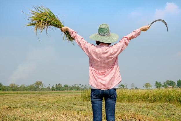 田んぼの田んぼを収穫する鎌を持っている帽子を身に着けている農夫の女性の後ろ。