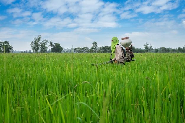 タイの農家から除草剤または化学肥料へ緑の稲作の分野