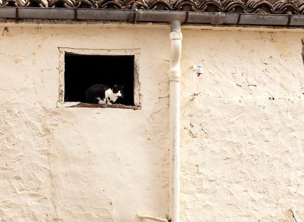 黒と白の猫