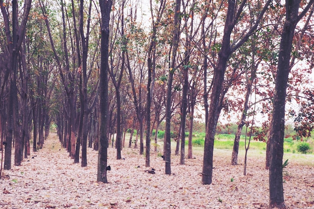 Красочные деревья в весенний сезон