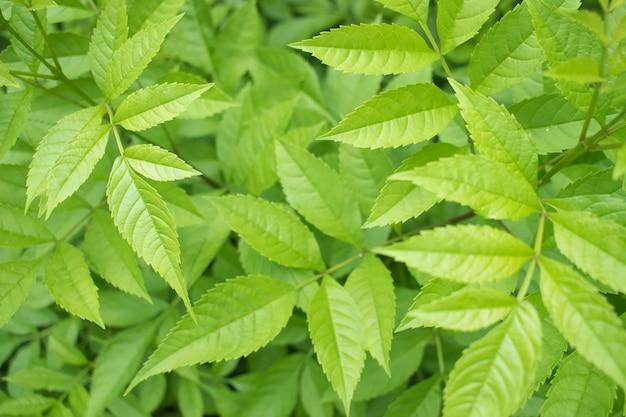 新鮮な葉と緑