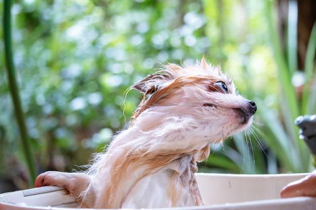 犬はシャワーを浴びています。
