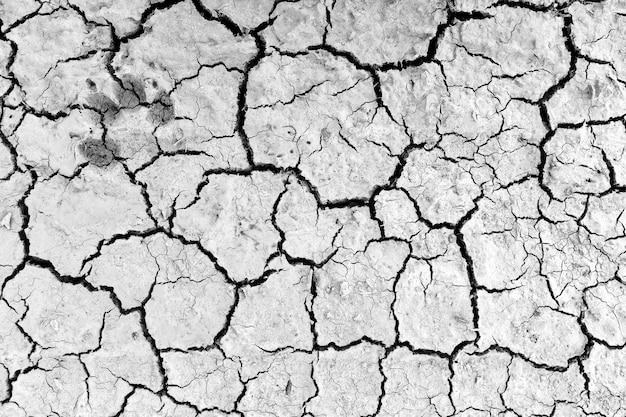 背景の乾いた土壌に犬の足跡