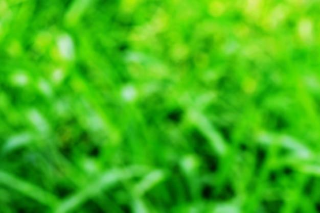 ぼやけた緑の背景