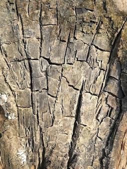 表面の古い木の背景