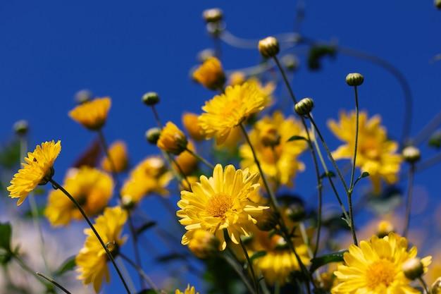 木の上の緑の葉と菊の花