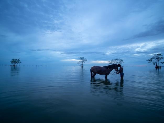 少年と馬の間の愛
