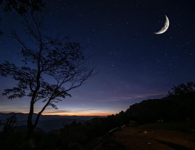 Силуэт дерева на вершине горы зрения против многих звезд с круассаном луной и небольшим солнечным светом рано утром, пейзажный вид в концепции природного туризма