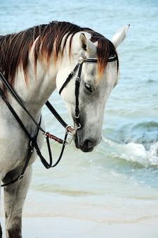 ビーチの馬の肖像画